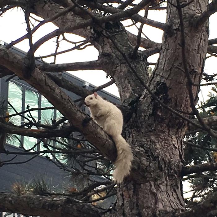 White Squirrel 1.jpg