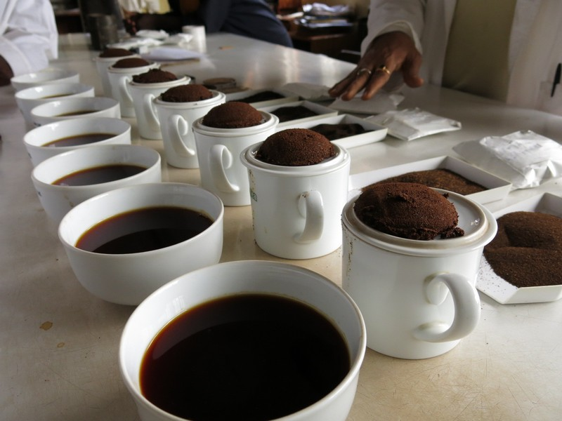 Cupping in Mulanje,  photo by Travis Marshall