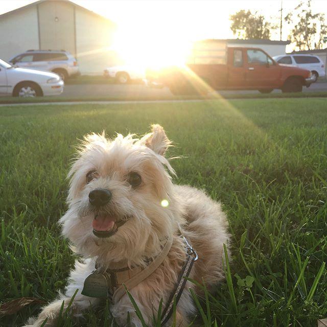 Summertime 🌱🌞🐶🐶 #chicotron #maya #dogsofinstagram
