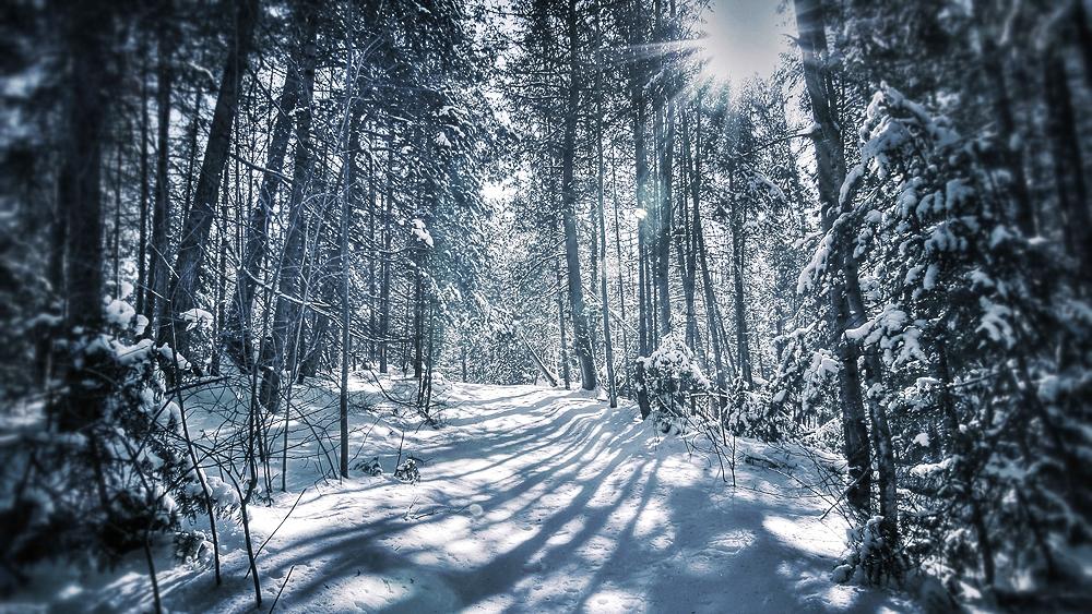 Frozen Shadows Web.jpg