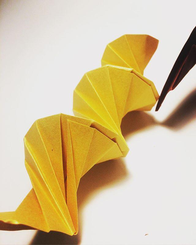 Golden blood  La spirale hélicoïdale, généralement construite selon la suite de #fibonacci , est fréquente dans le monde vivant! Ça rassemble à de l'#adn  C'est beau ça!  Et vous qu'est que vous y voyez?🧐🤓 #origami #origamiart #art #paper #paperdesign #design #papier #spirale #geometrie #mathematics #science #origamidesign #curiosity