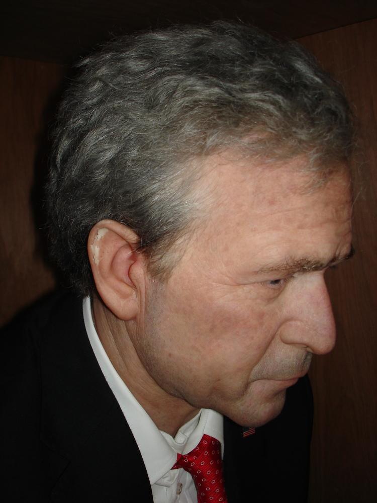 bush16.jpg