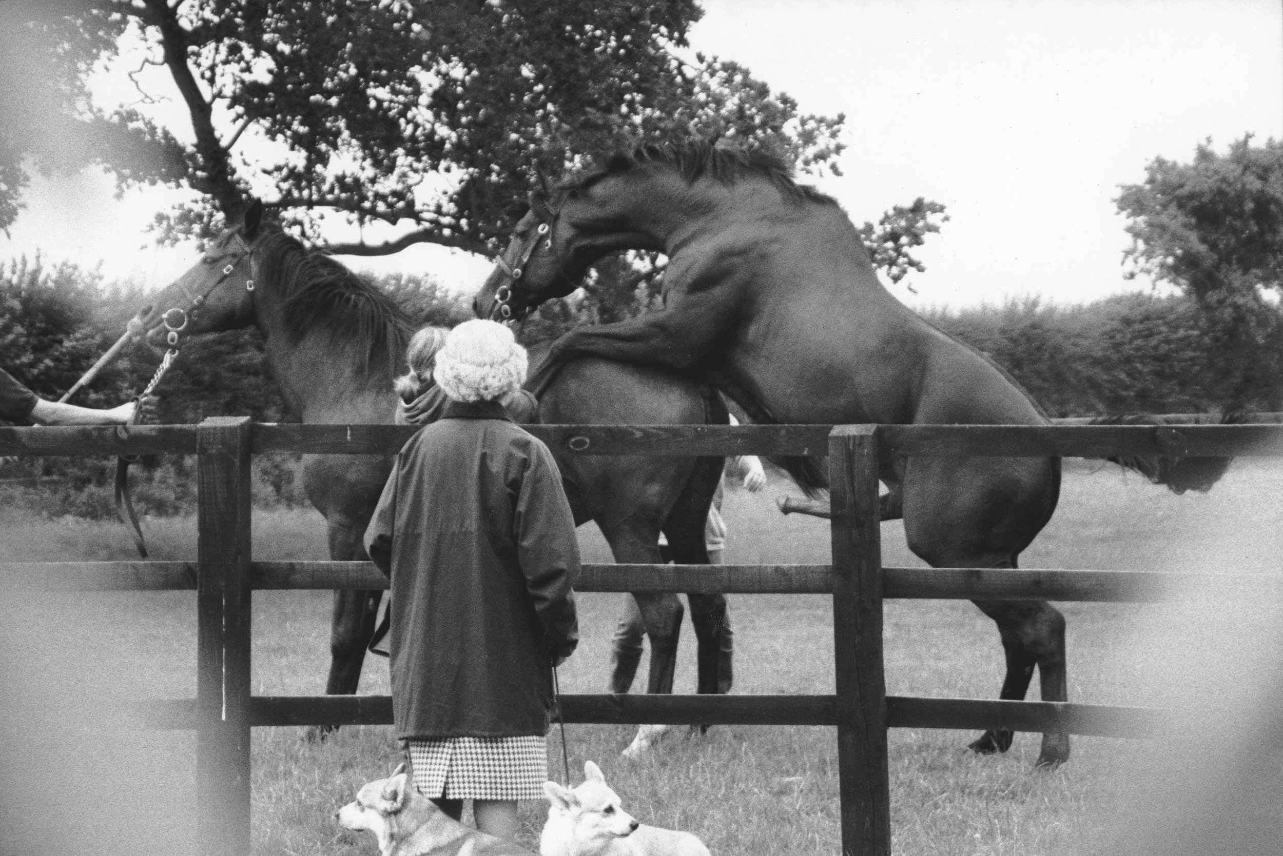13 Queen-horses-mate_Fotor1.jpg
