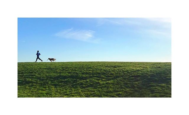 Interspecies Friendship. . . . . . . #dogsofinstagram #dog #florida #park #outdoors #beautifulday #friends #lab #running #fetch #run #live #tbt