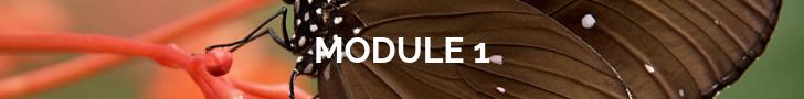 module 1 (1).png