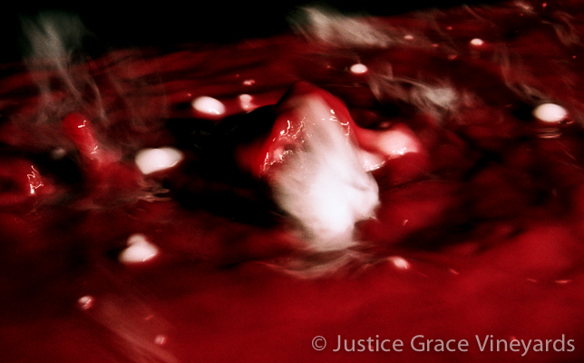 Pinot on Ice New VI.jpg