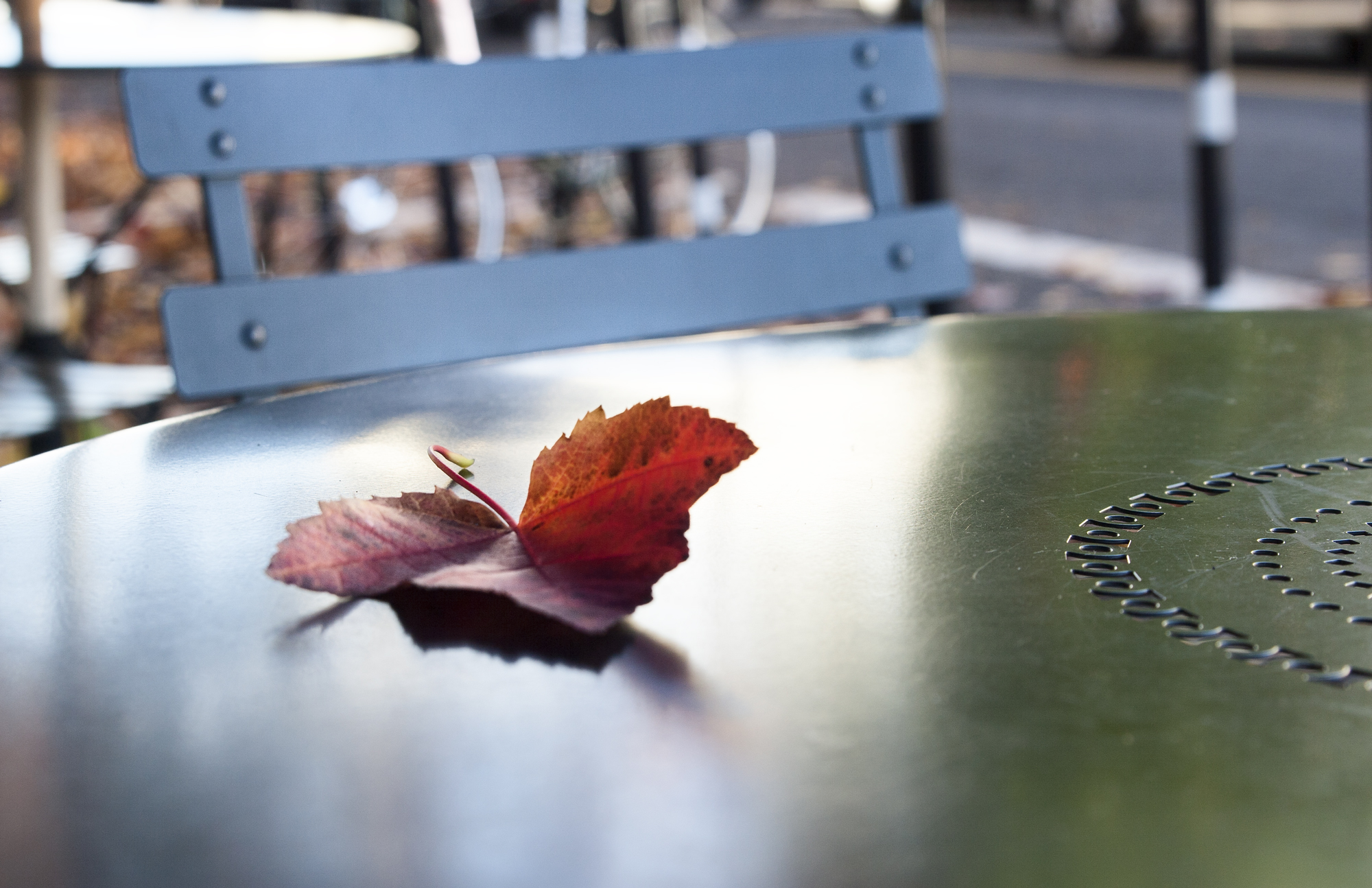 red_leaf_on_table_portfolio_web.jpg