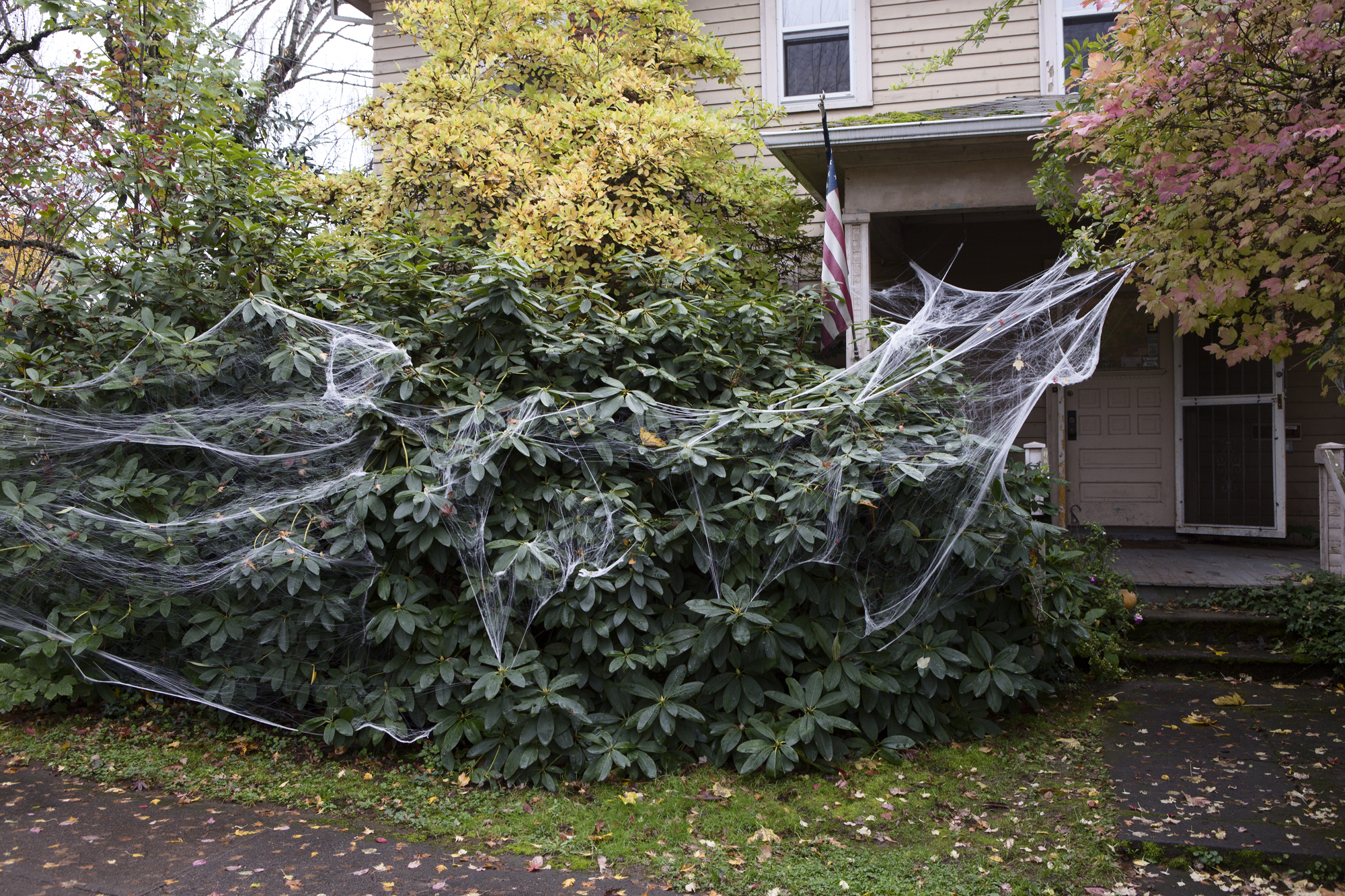 fake_spider_webbing_on_front_porch_bush_web.jpg