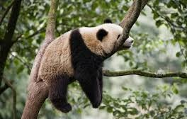 so you can chill like this panda