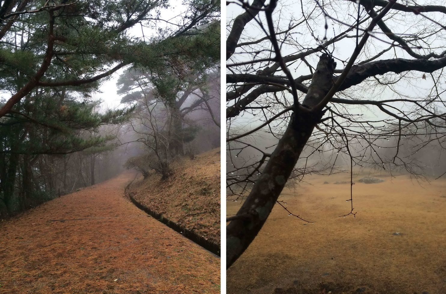 山上霧濛濛的一片