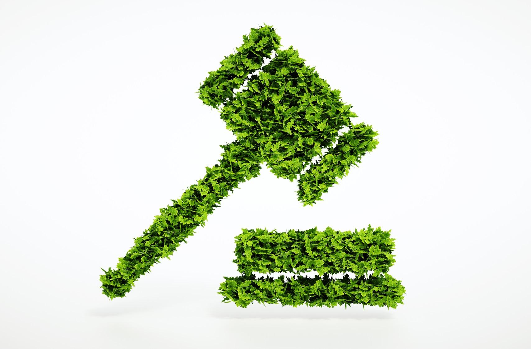 gavel plant.jpg