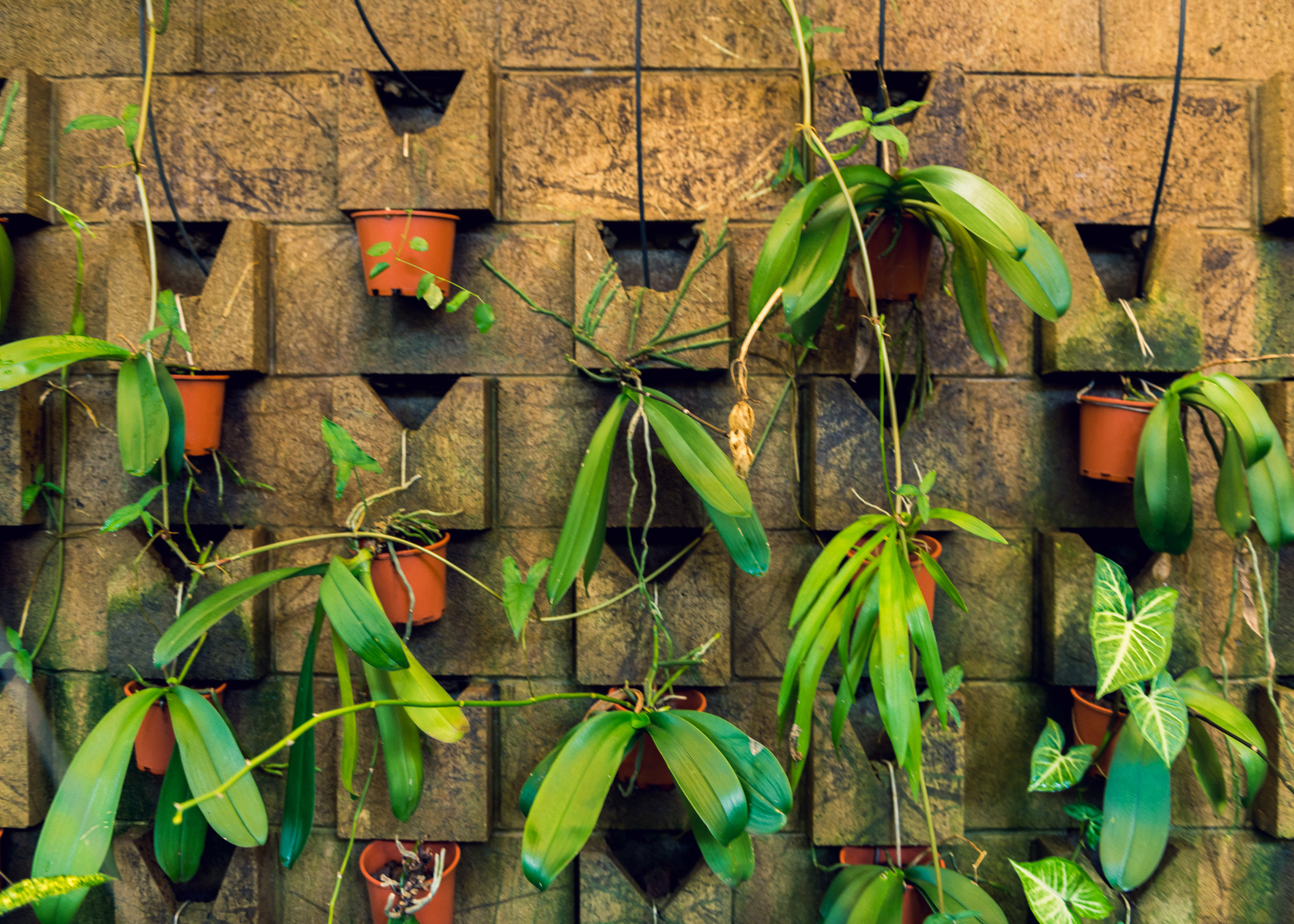 """A small section of wall is lined with a versatile display fed by an inventive built-in watering system. In years past it flourished, filled to the brim with flowering orchids, and was quite a spectacle. There was even a cover charge for those who came to take in the beauty. But alas, like many old world marvels reminiscent of """"Ripley's Believe It or Not"""" ventures this display was soon laid to waste by the charms of modern technology."""