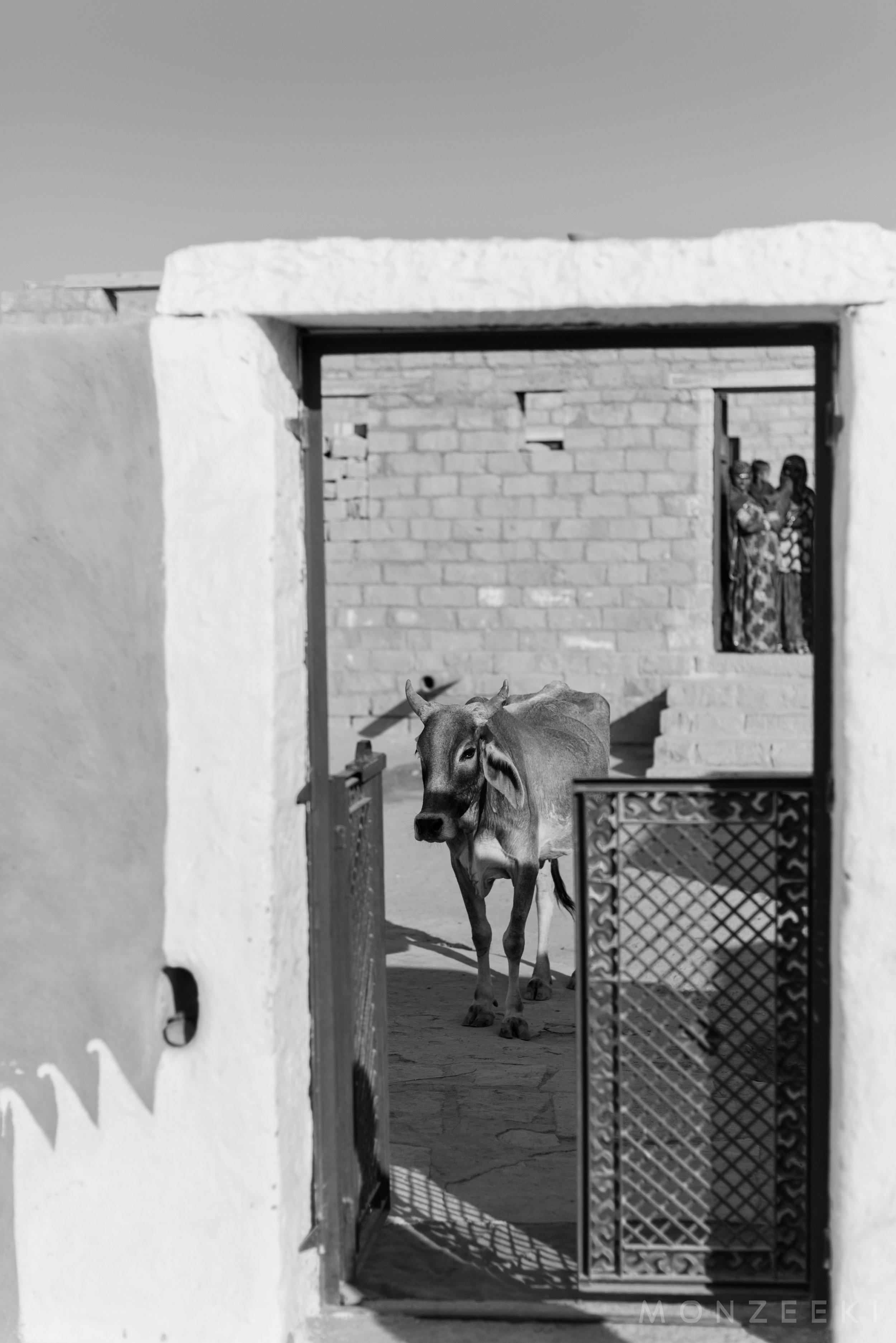 20150116-India-Jaisalmer-3410.jpg