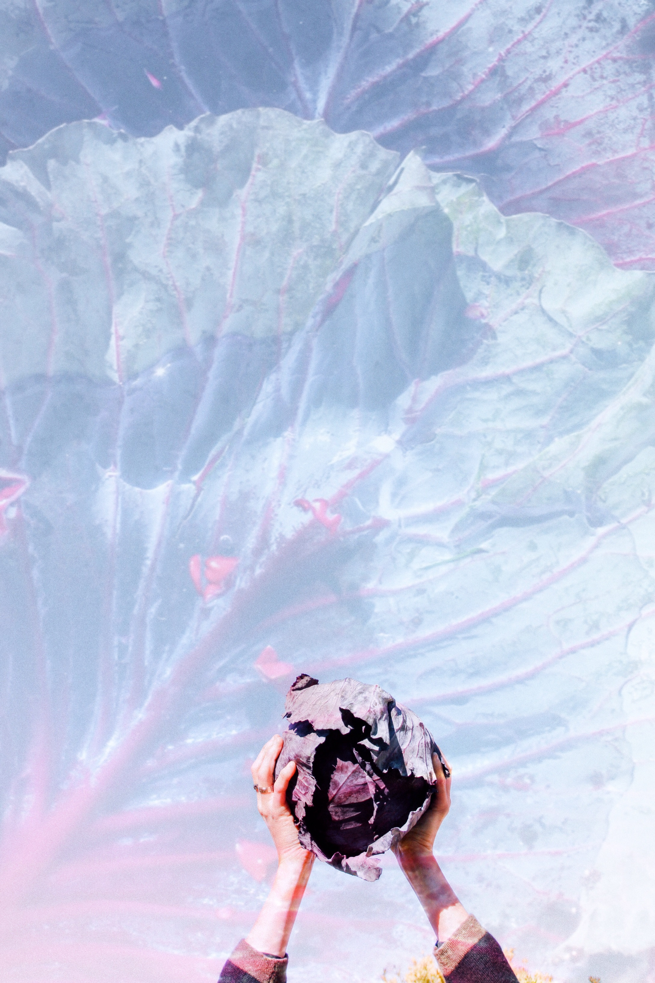 space-cabbage-thehonestjones