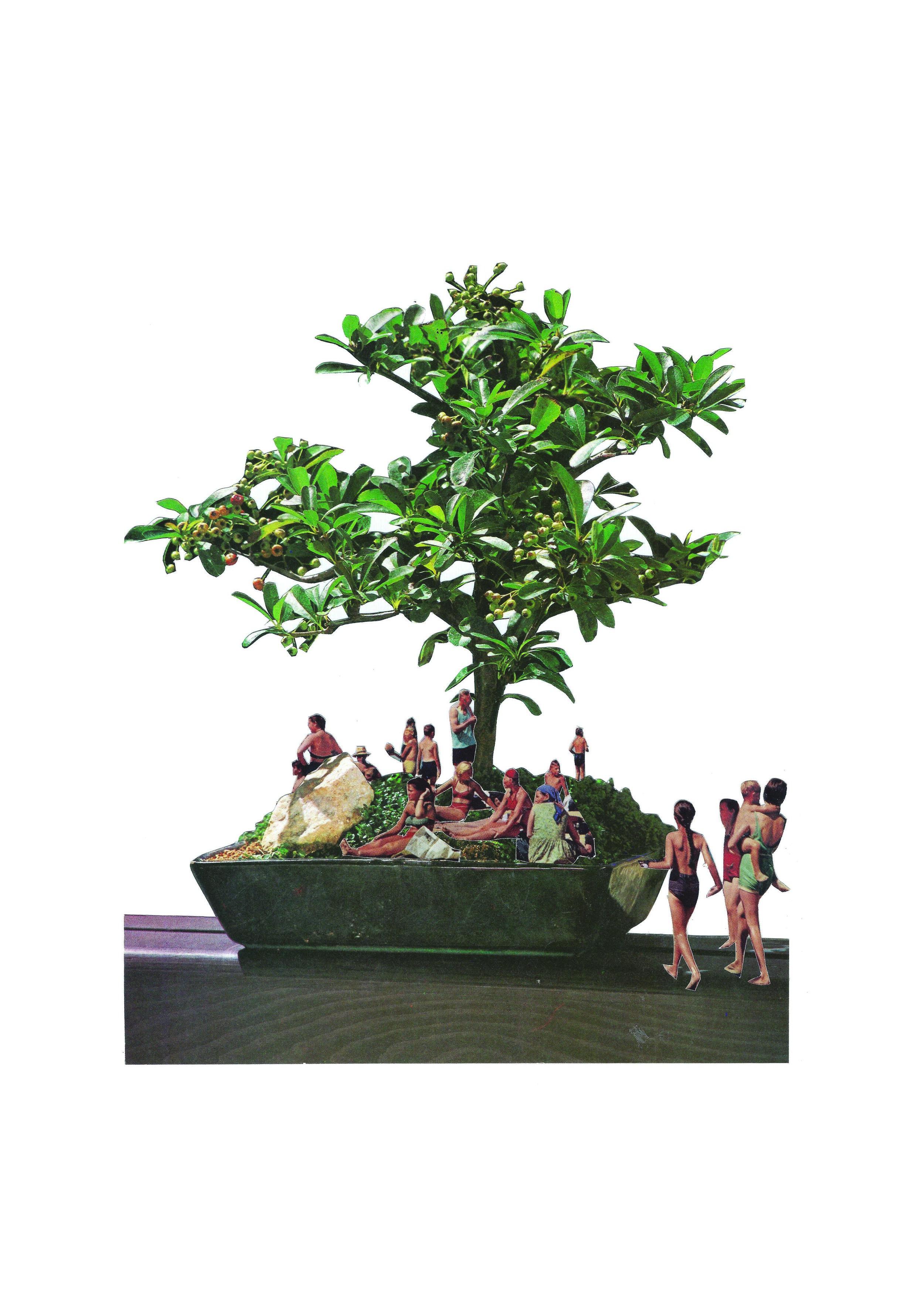 japan_bonsai.jpg