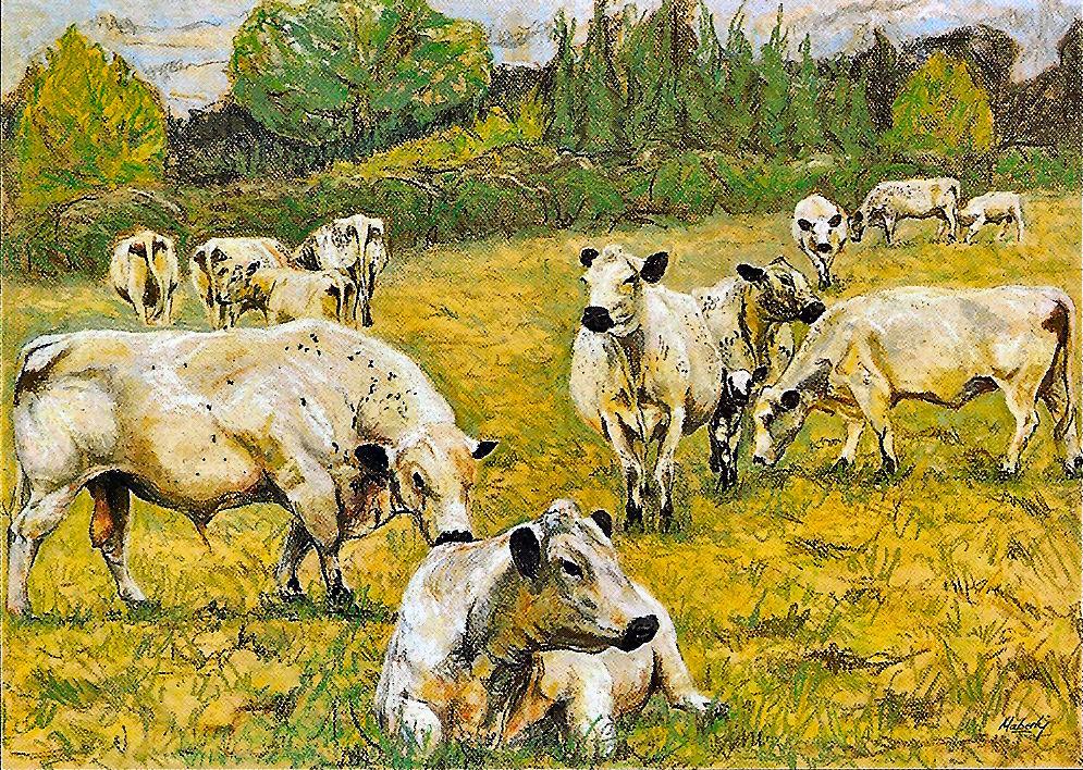 The Woodbastic herd of British whites