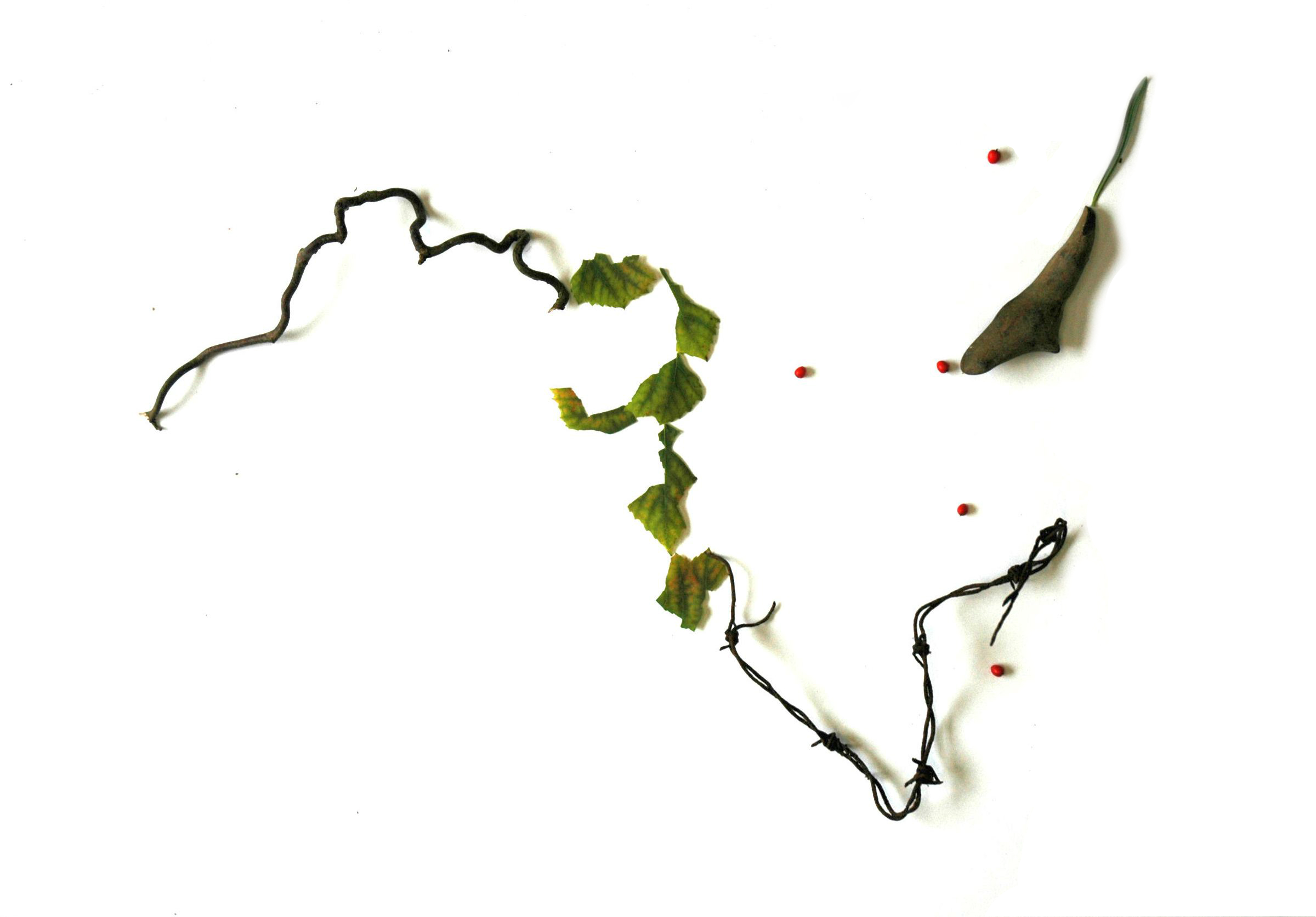 Twigs, leaves and berries
