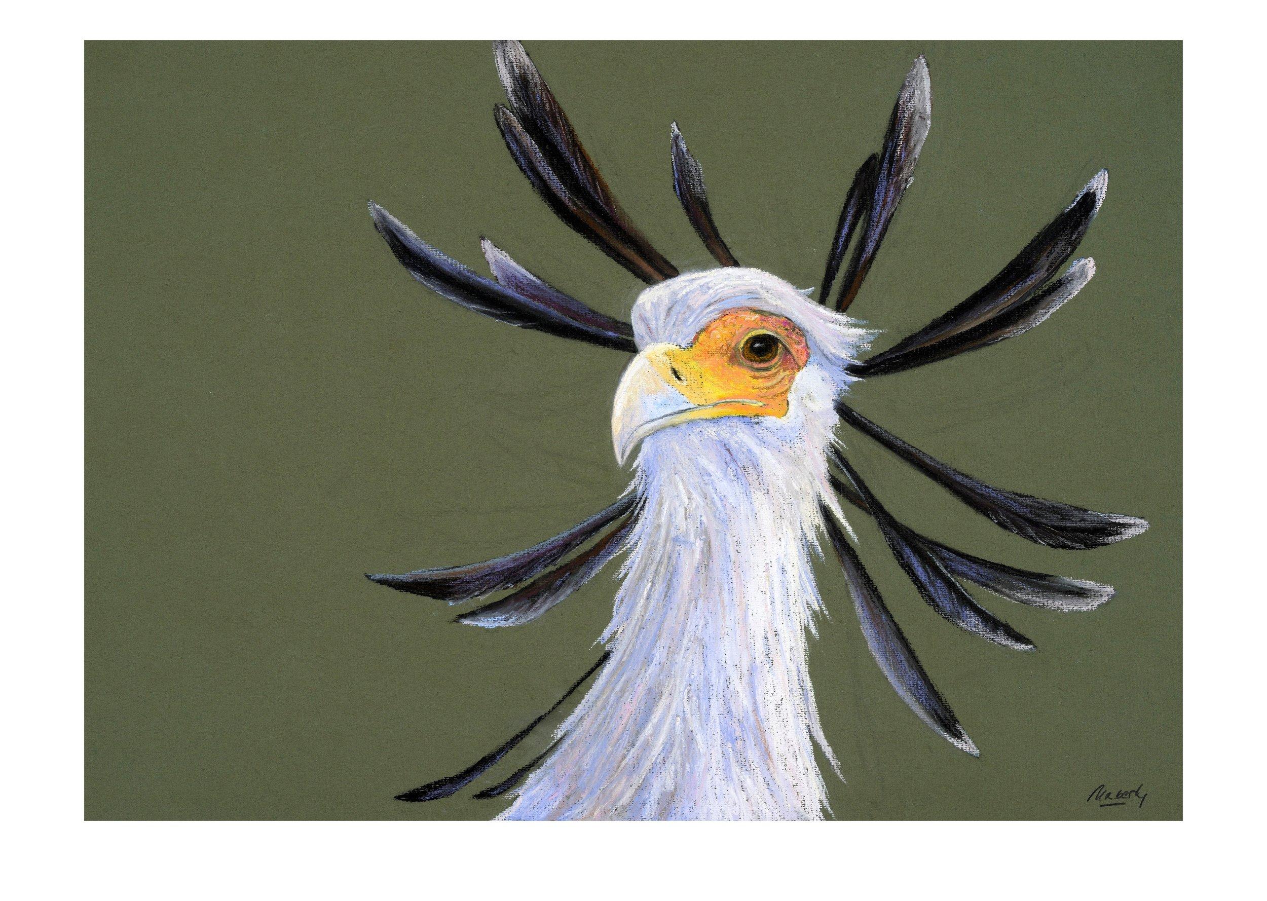 Secretary bird.colour..jpg
