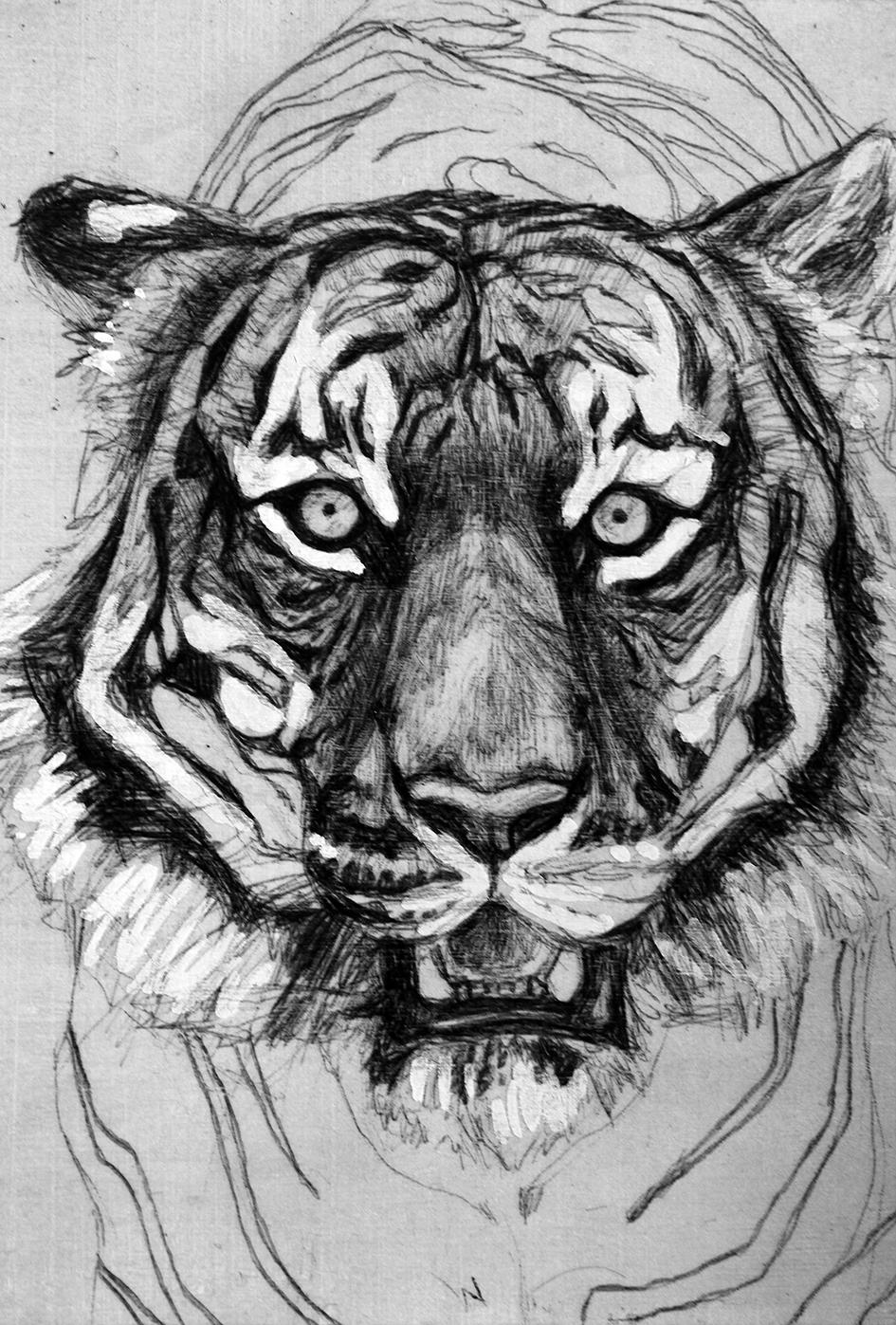 tiger_4.jpg