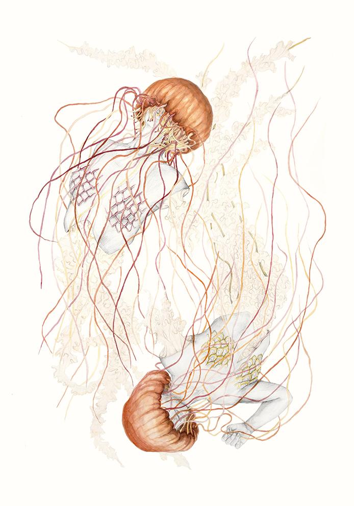 Jellyfish V.jpg