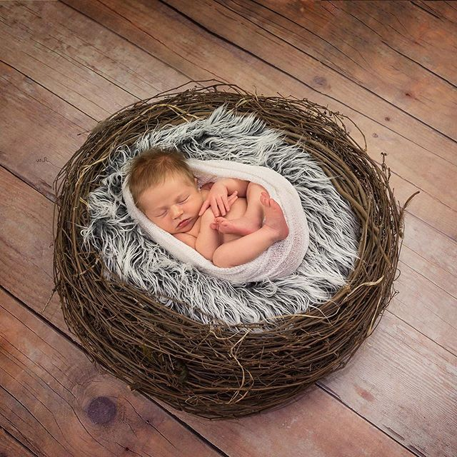 This is of course how all babies arrive....in a perfect little nest