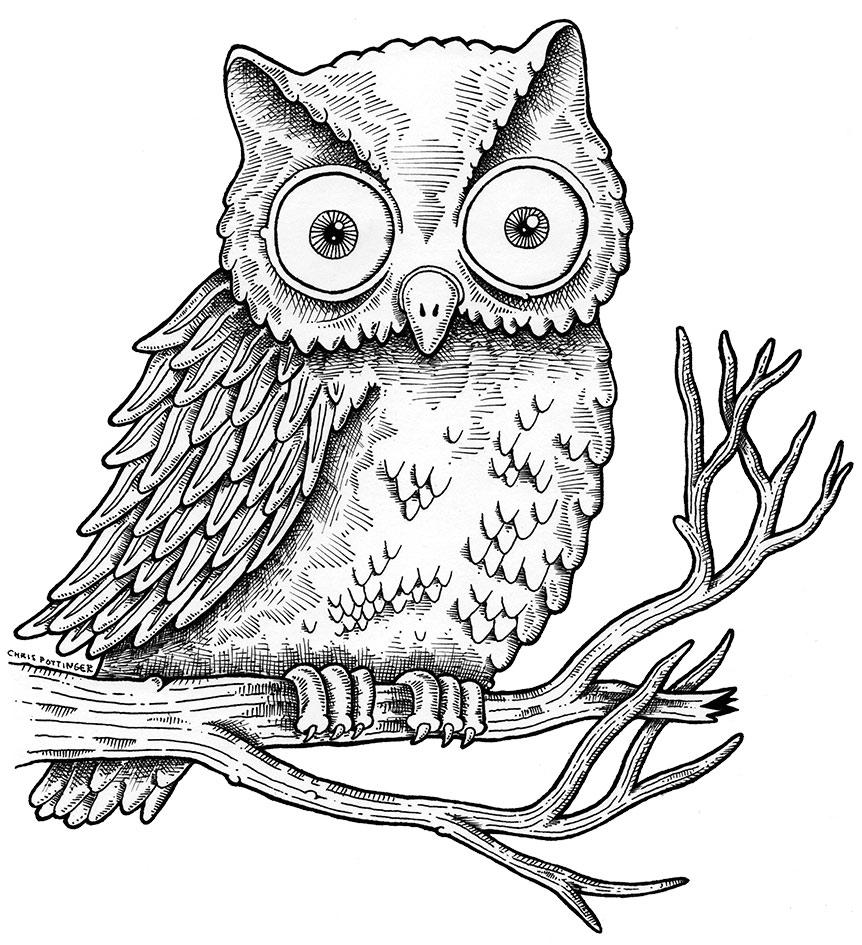 Owl -- Chris Pottinger