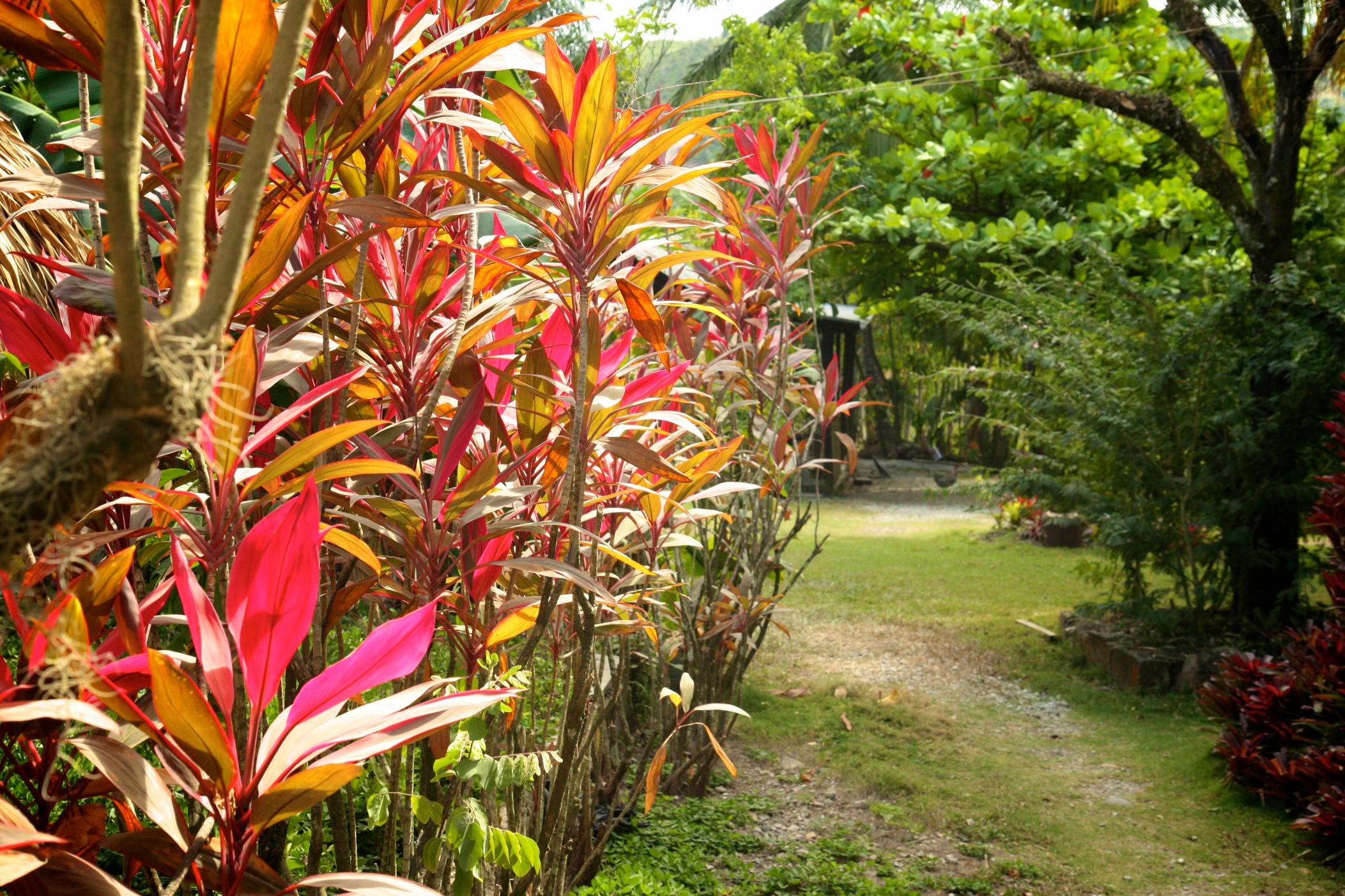 flora_8553862670_o.jpg