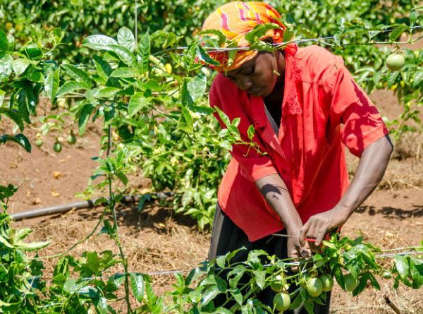 Agro-processing - Adding value to agricultural commodities is a promising, straight forward way of keeping more value for goods within agriculture-based economies, such as those found in East Africa. The best way to deal with abundanceRead More