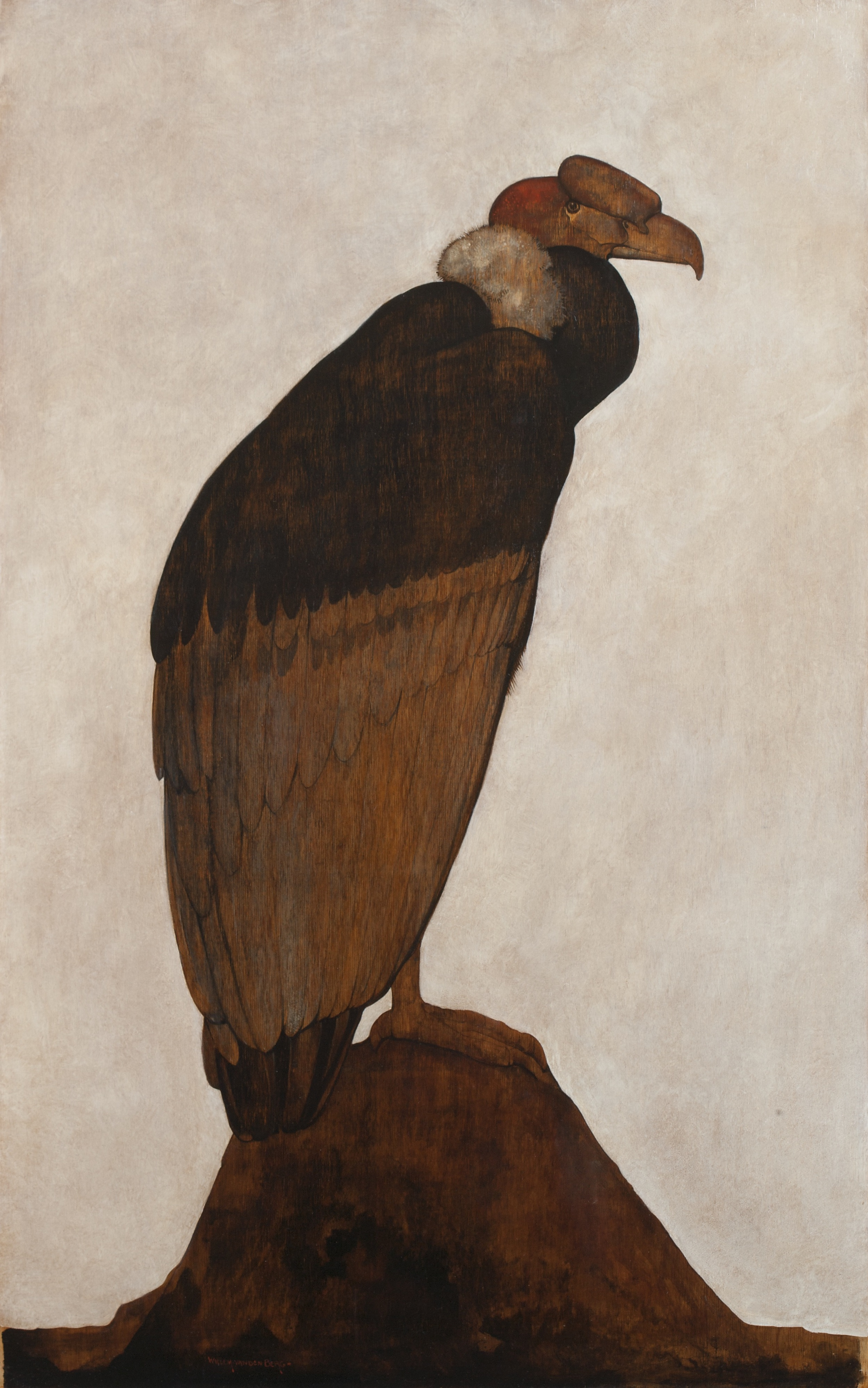 Van den Berg - Vulture V0M0272.jpg