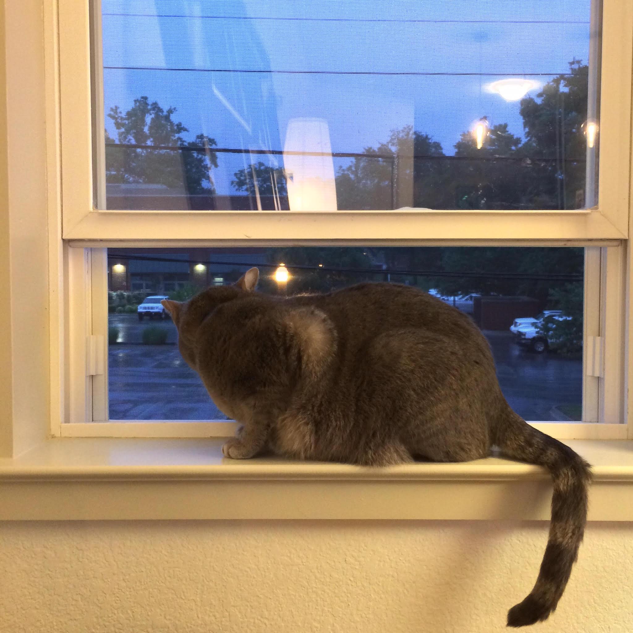 nicolson cat.jpg