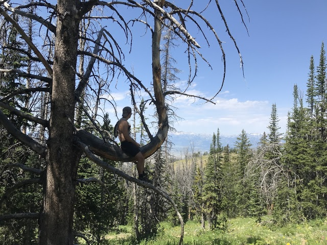 Jared in a Tree.jpg