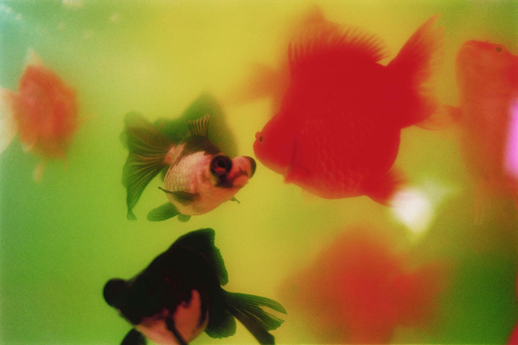 Liquid Dreams-45(credits©mika ninagawa Courtesy of Tomio Koyama Gallery)-s.jpg