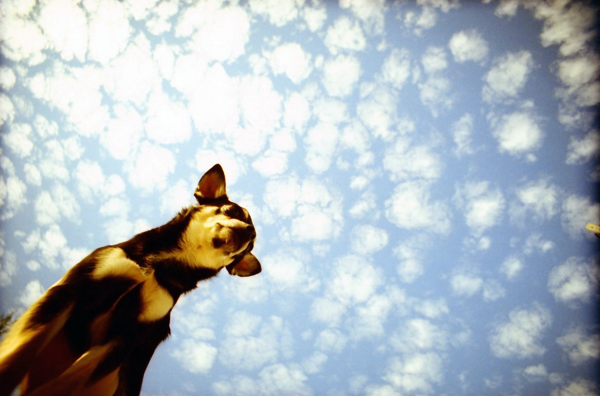 Lomography:Photo by drame
