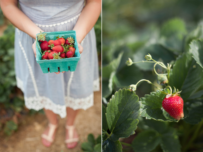 Hopkins May 2015-strawberry.jpg