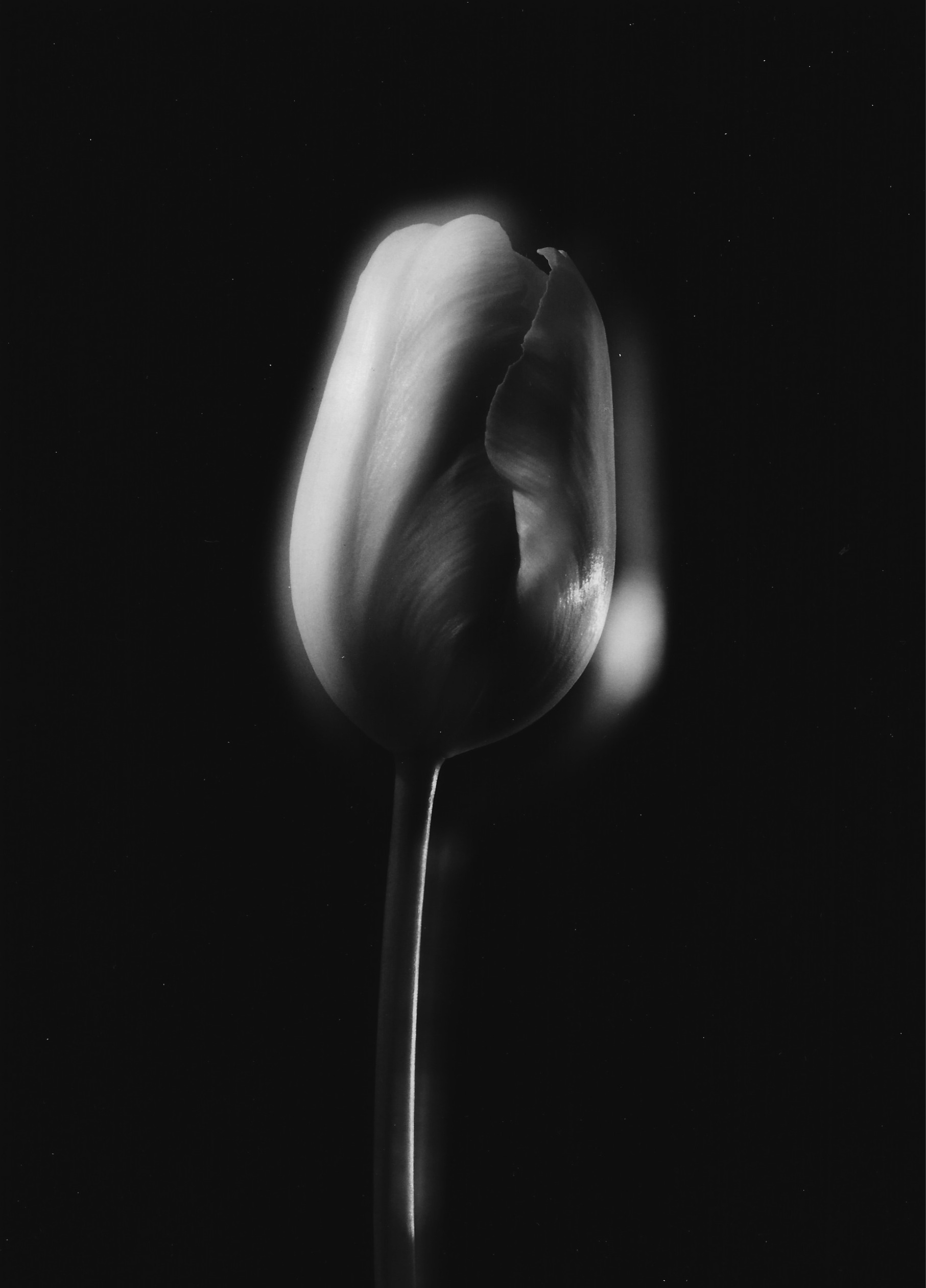 Untitled , c. 1987  Gelatin silver photograph.  8 3/8 x 6 inches