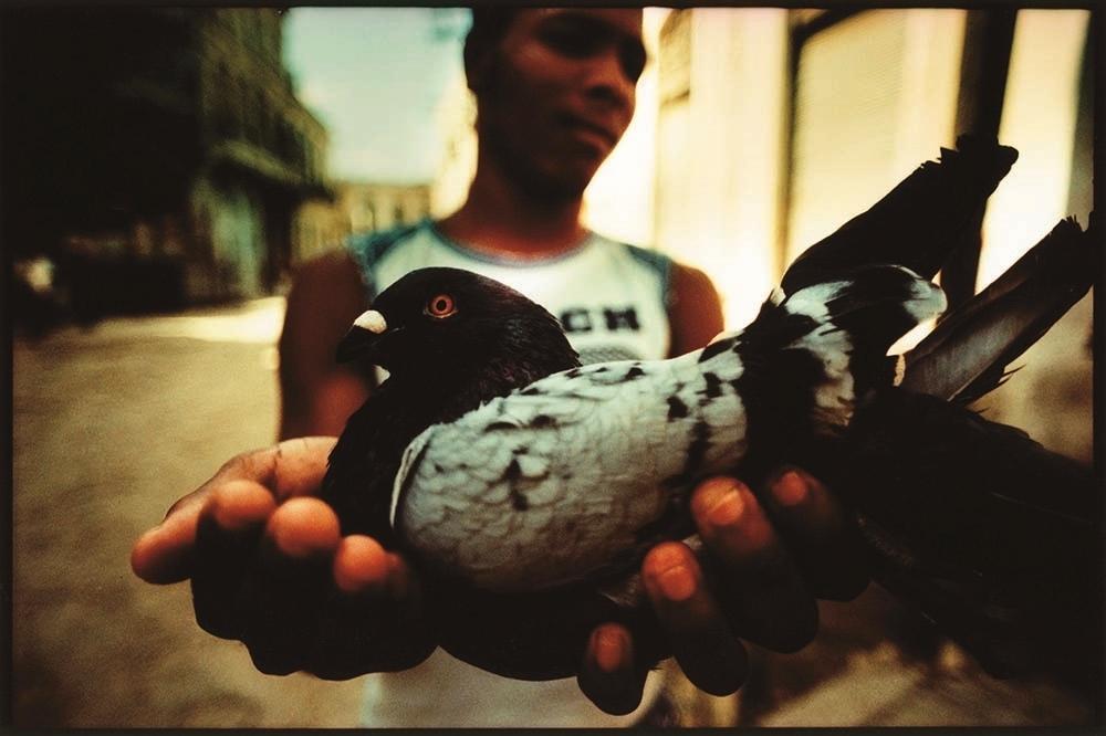 pigeon_2008.jpg