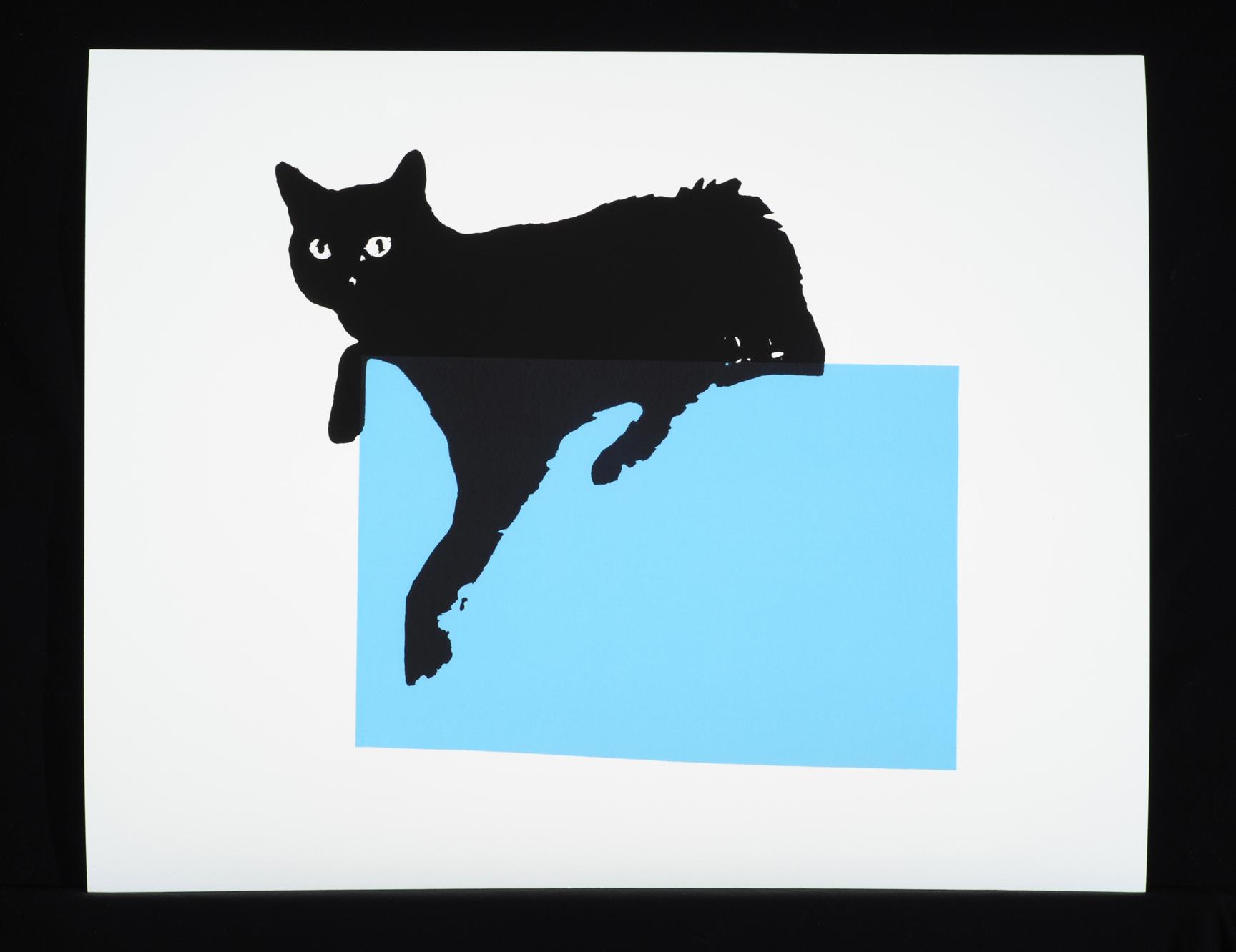 Blue Box Cat