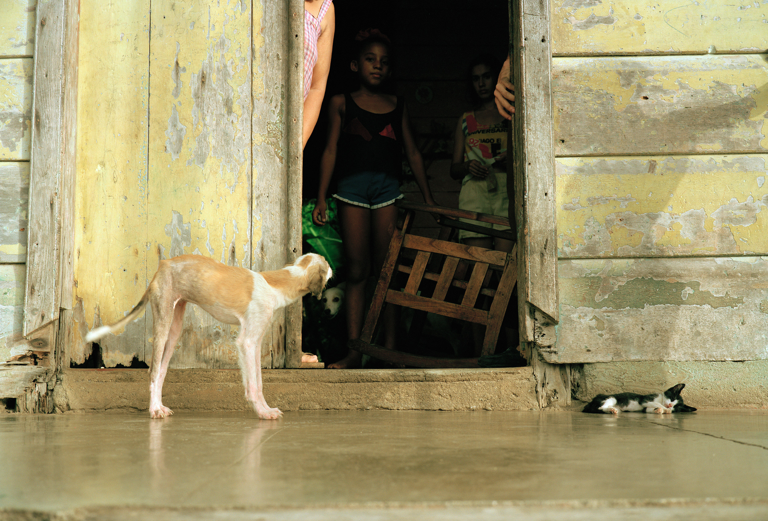 11.92BC_ PupKitten-Baracoa069.jpg