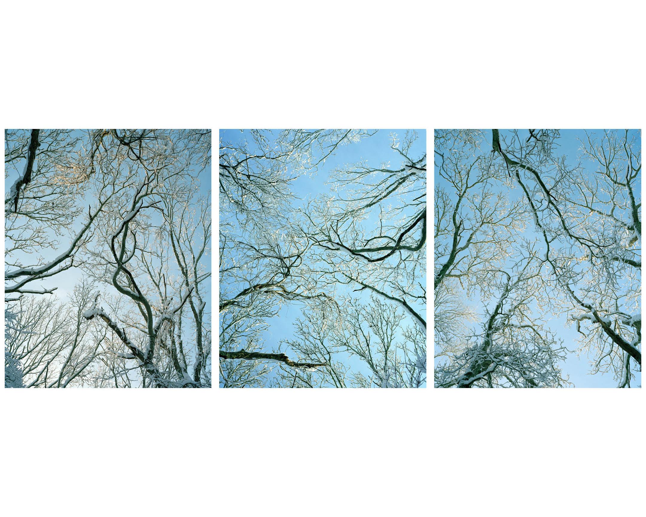 Trees 6.jpg