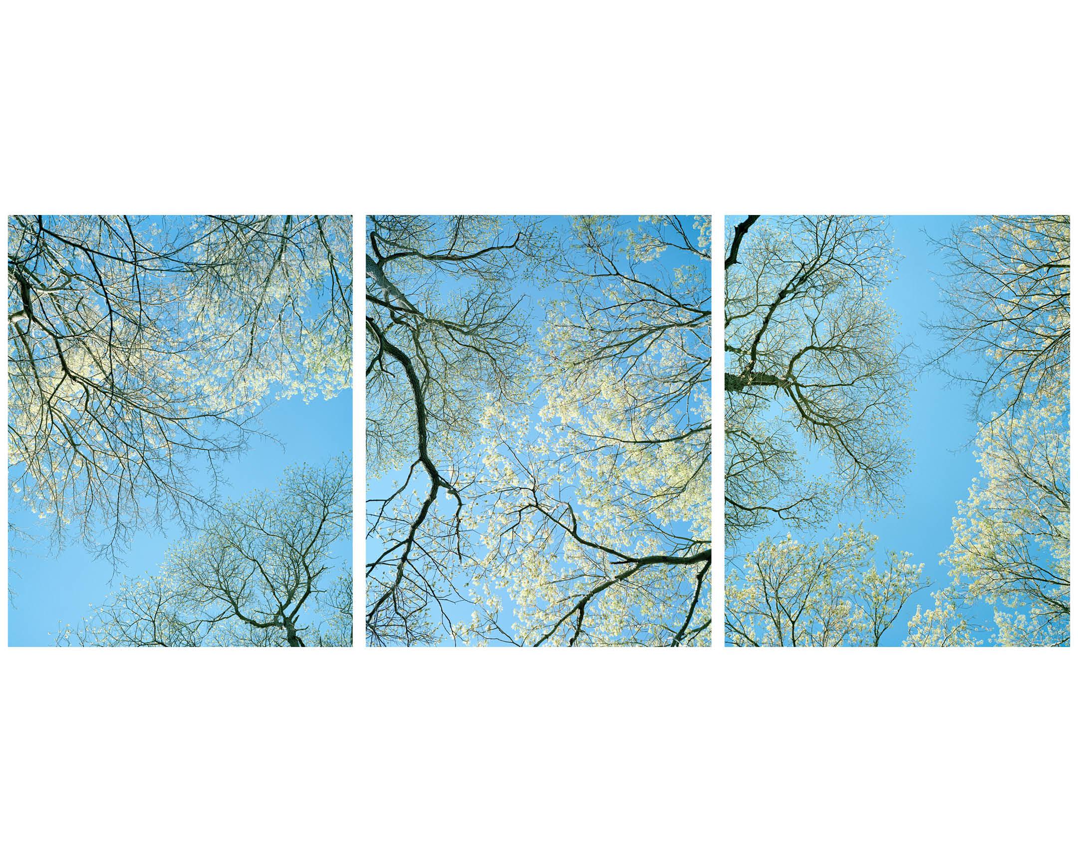 Trees 7.jpg