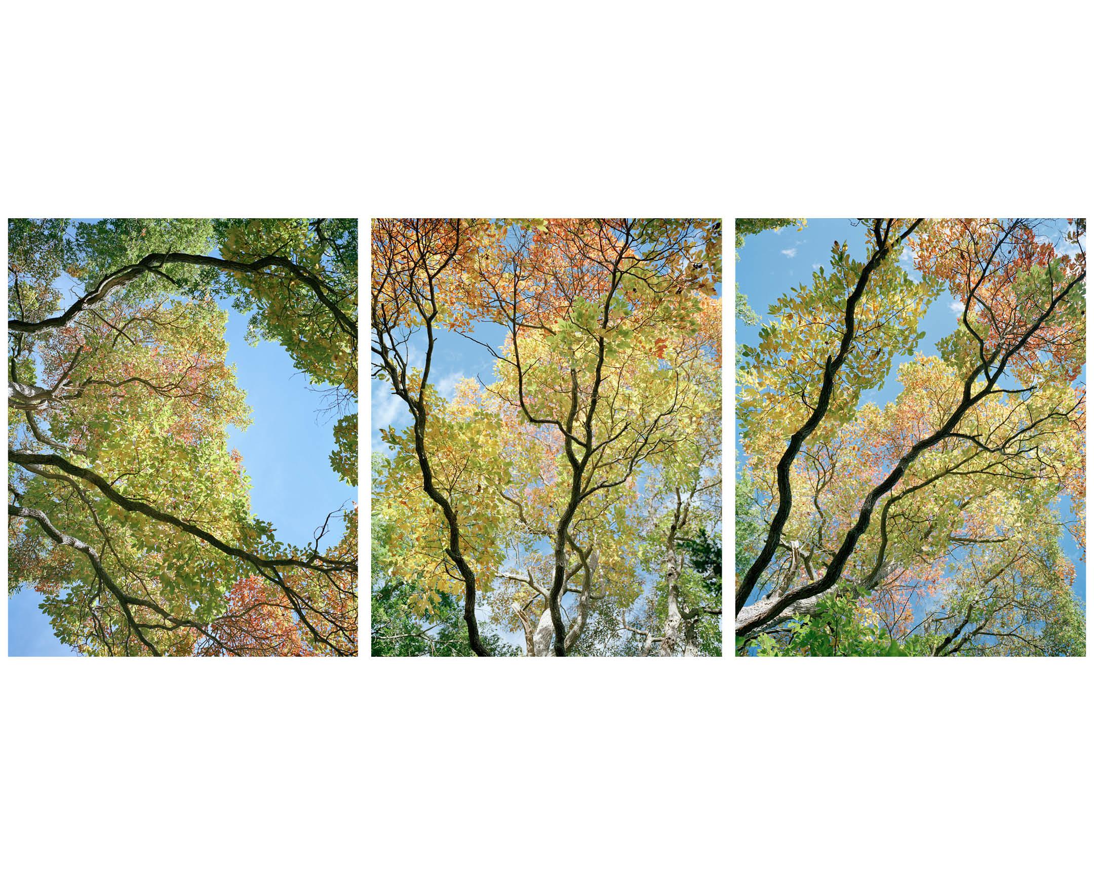 Trees 10.jpg