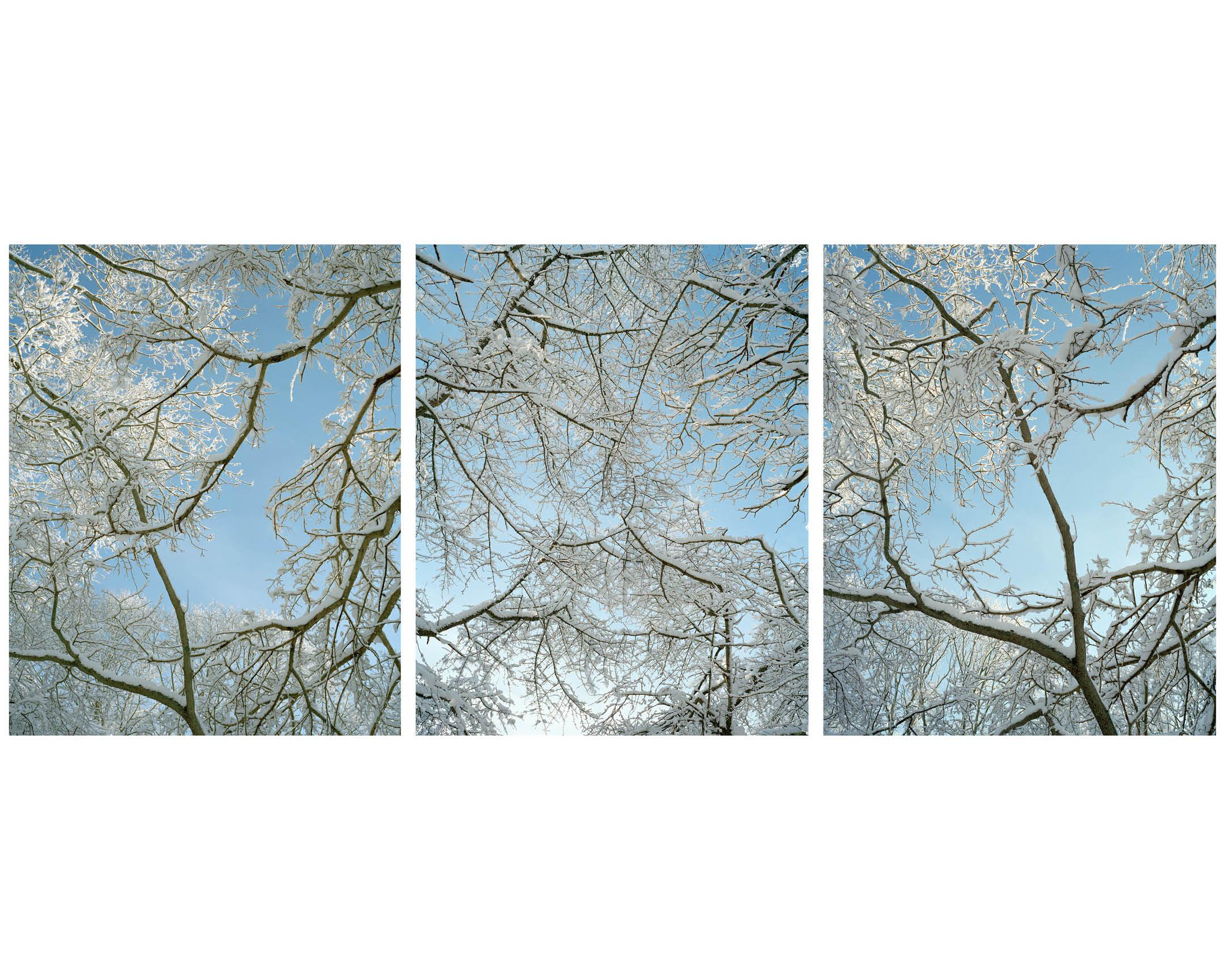 Trees 11.jpg