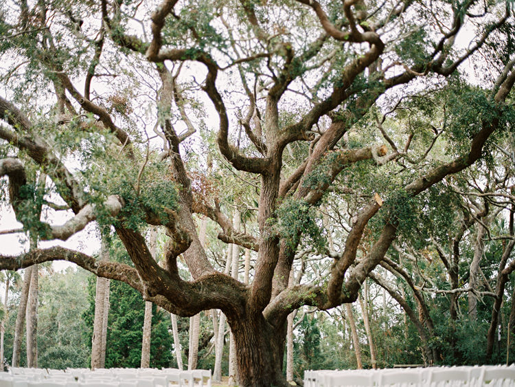 beautiful-live-oak-tree-at-the-ribault-club.jpg