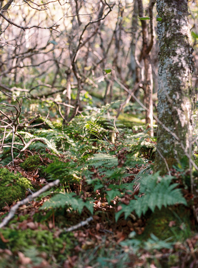 ferns-in-craggy-gardens-north-carolina.jpg