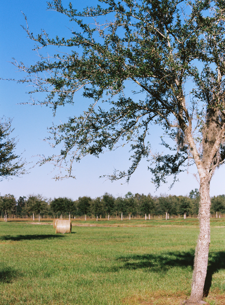 orchard-congaree-and-penn-farm.jpg