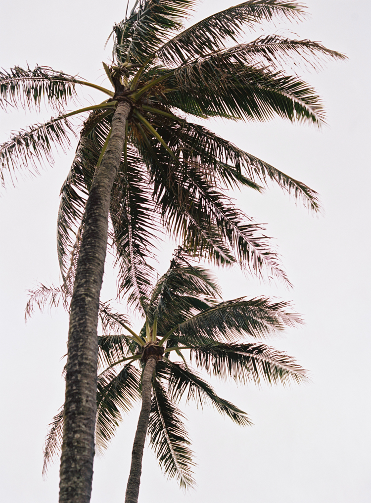 E-M-Anderson-Photography-Lahaina-Maui-19.jpg