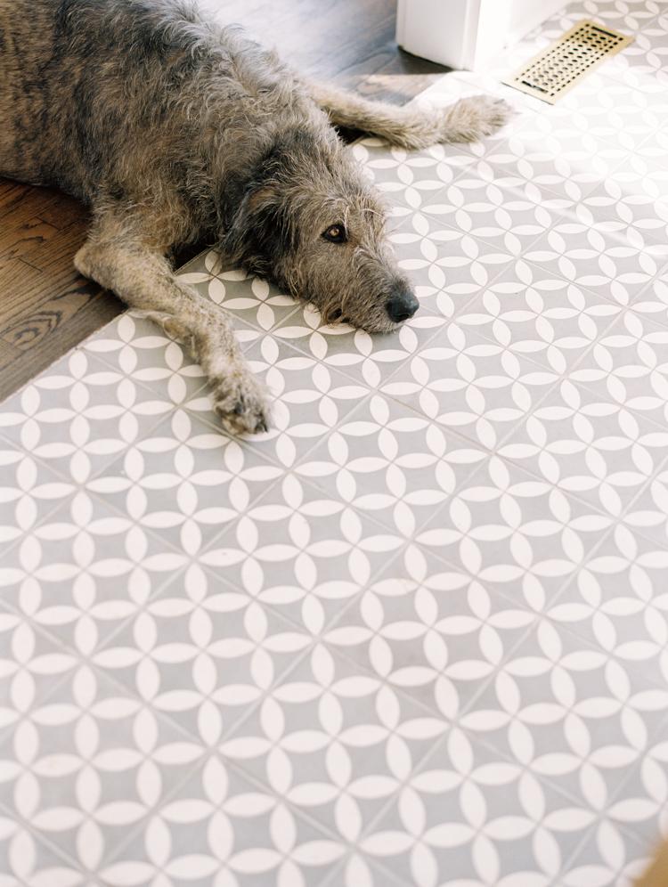 Irish-wolfhound-resting-on-tile-floor.jpg