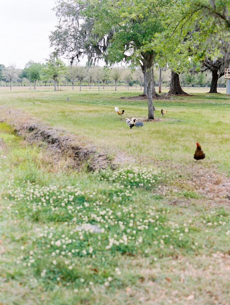 jacksonville-farm-Lindsey-Meyer-29.jpg