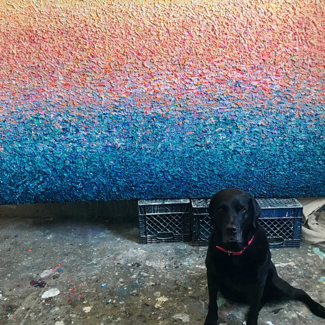 My studio mate Coco in front of a very textured and heavy recent painting. Acrylic on canvas, 48 x 84""