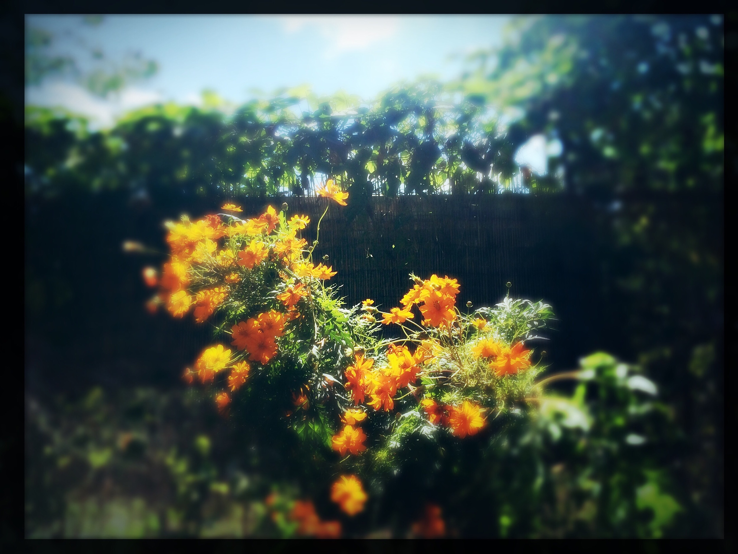 Happy pic from my garden. Inspiration for colour